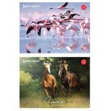 """Альбом для рисования, А4, 32 л., обложка картон, BRAUBERG """"Живая природа"""", 103683"""