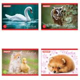 Альбом для рисования, А5, 20 л., ПИФАГОР, обложка офсет, 100 г/м<sup>2</sup>, &quot;Животные&quot;, 4 вида, 103723