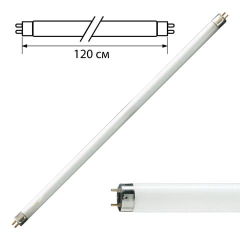 Лампа люминесцентная PHILIPS TL-D 36W/54-765, 36 Вт, цоколь G13, в виде трубки 120 см, холодный дневной свет, 815849