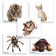 Коврик для мыши DEFENDER Silk, шелк+резина, 230x190x1,6мм, 10 видов, 50706
